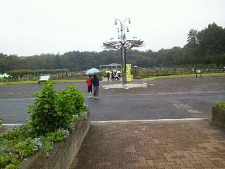 雨の神代植物公園